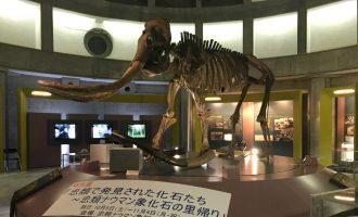 10/5~11/4 忠類ナウマン象の里帰り ~忠類ナウマン象化石骨発見50周年~